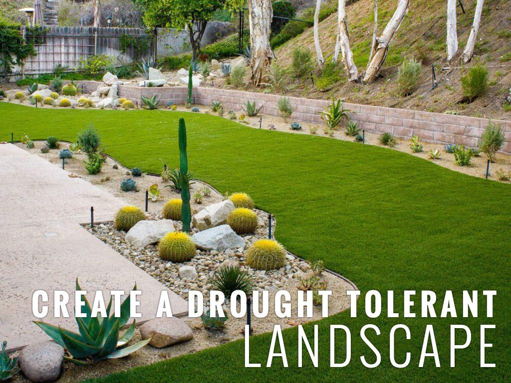 & CREATE A DROUGHT TOLERANT LANDSCAPE | Turf Pros Solution